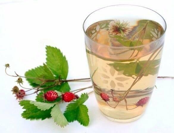 Чай из листьев земляники — польза и вред | польза и вред