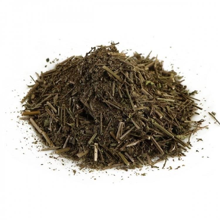 Трава вербены лекарственной: лечебные свойства, инструкция по применению и противопоказания