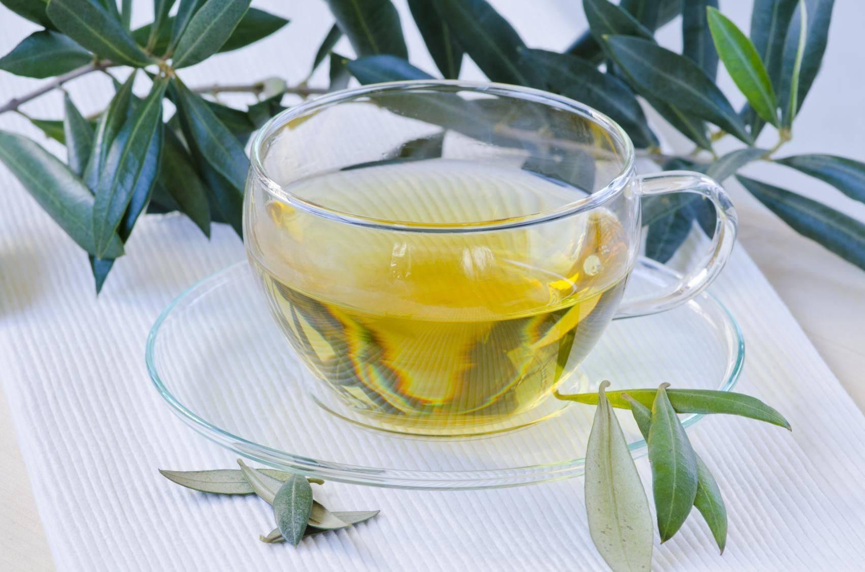 Чай из листьев оливы – полезные свойства, рецепты, отзывы