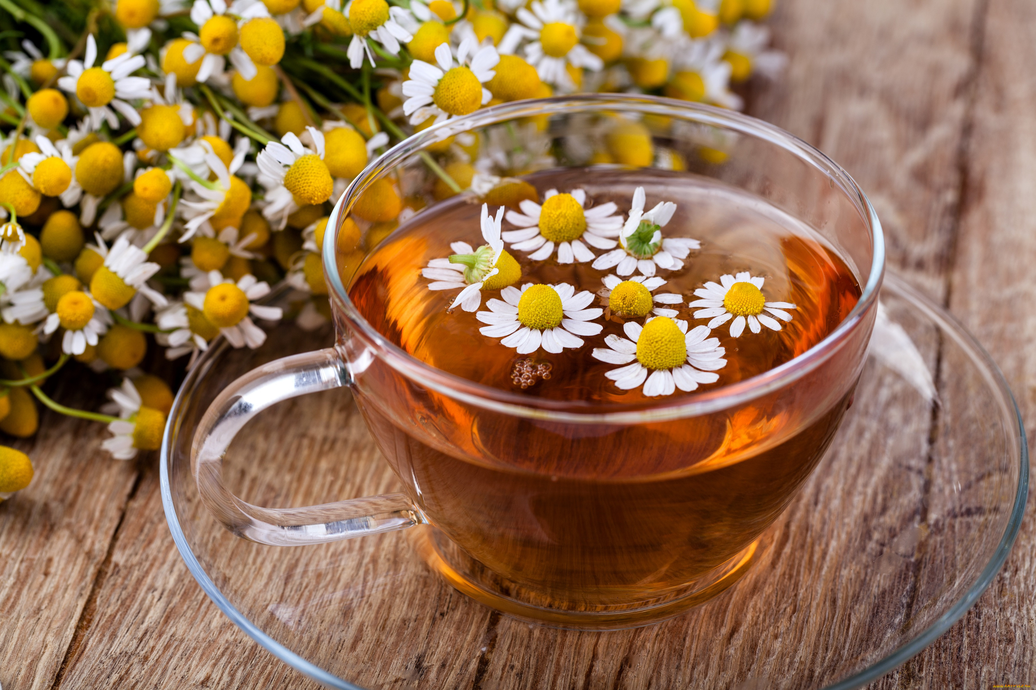 Ромашковый чай: польза и вред целебного напитка