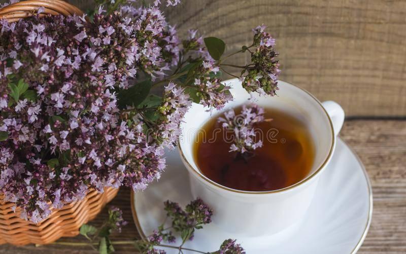 Чай из душицы: показания и противопоказания