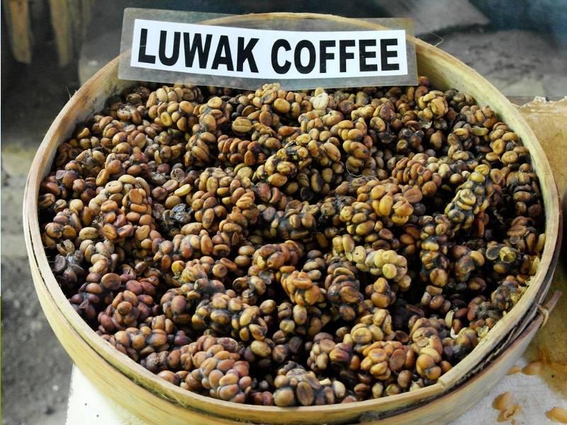 Вьетнамский кофе лювак: самый дорогой кофе из экскрементов