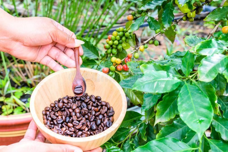 Уход selo.guru — интернет портал о сельском хозяйстве