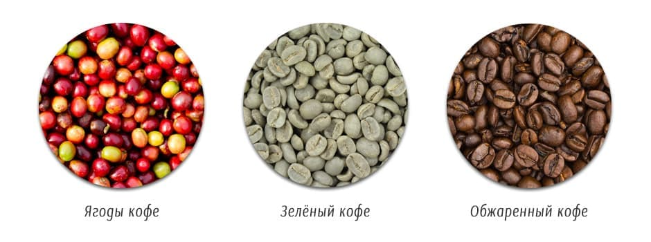 Какие существуют сорта кофе