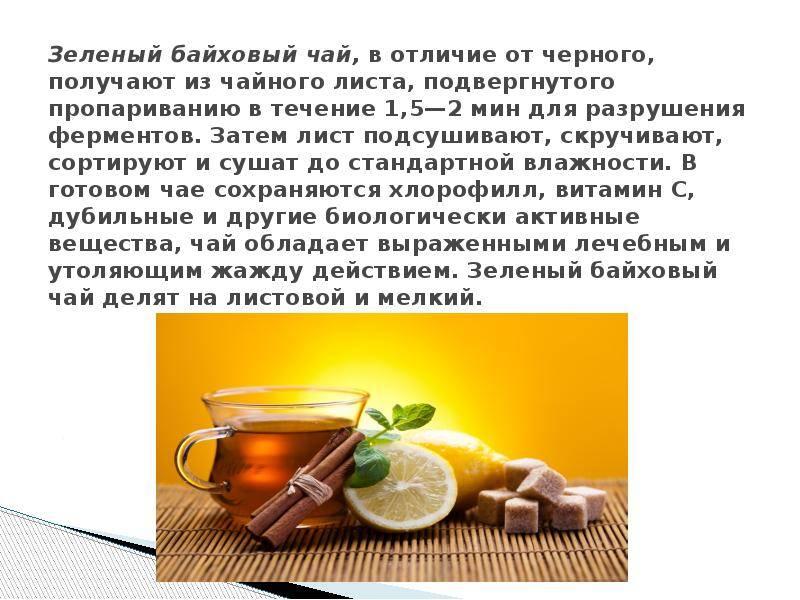 Байховый чай что это такое польза и вред