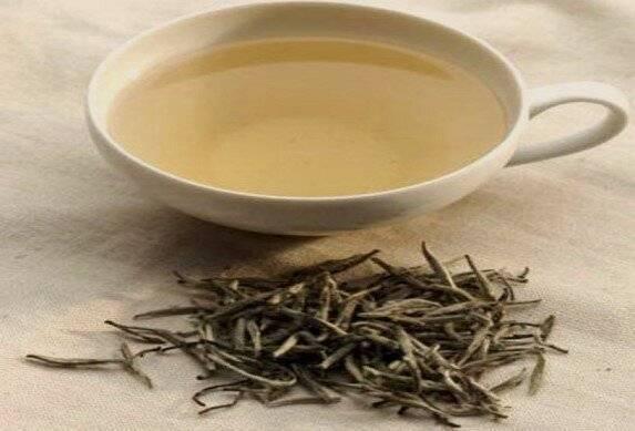 Белый чай - что это такое, польза и вред