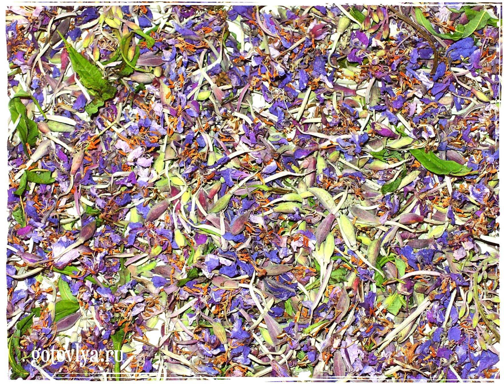 Иван-чай: как собирать и сушить. иван-чай в домашних условиях