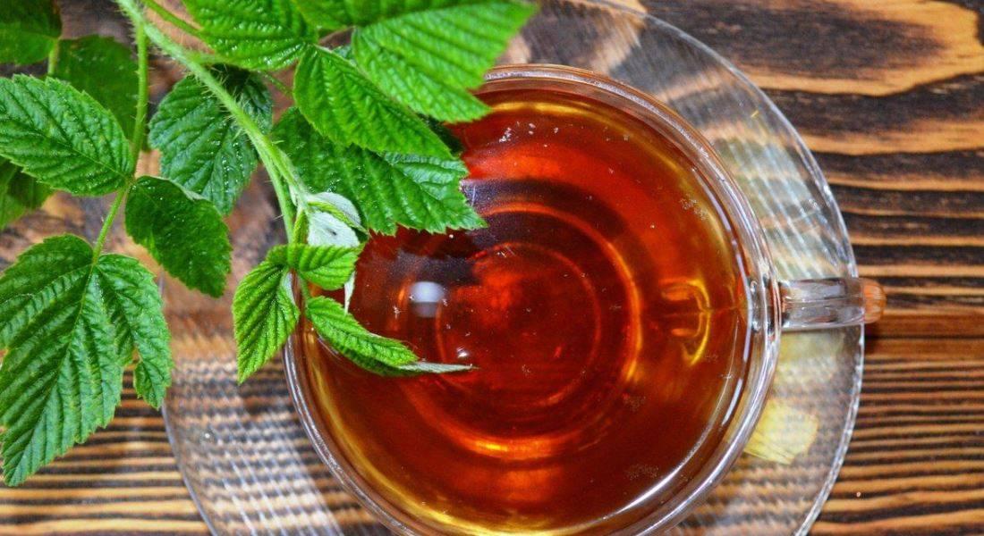 Чай из листьев малины - польза и вред