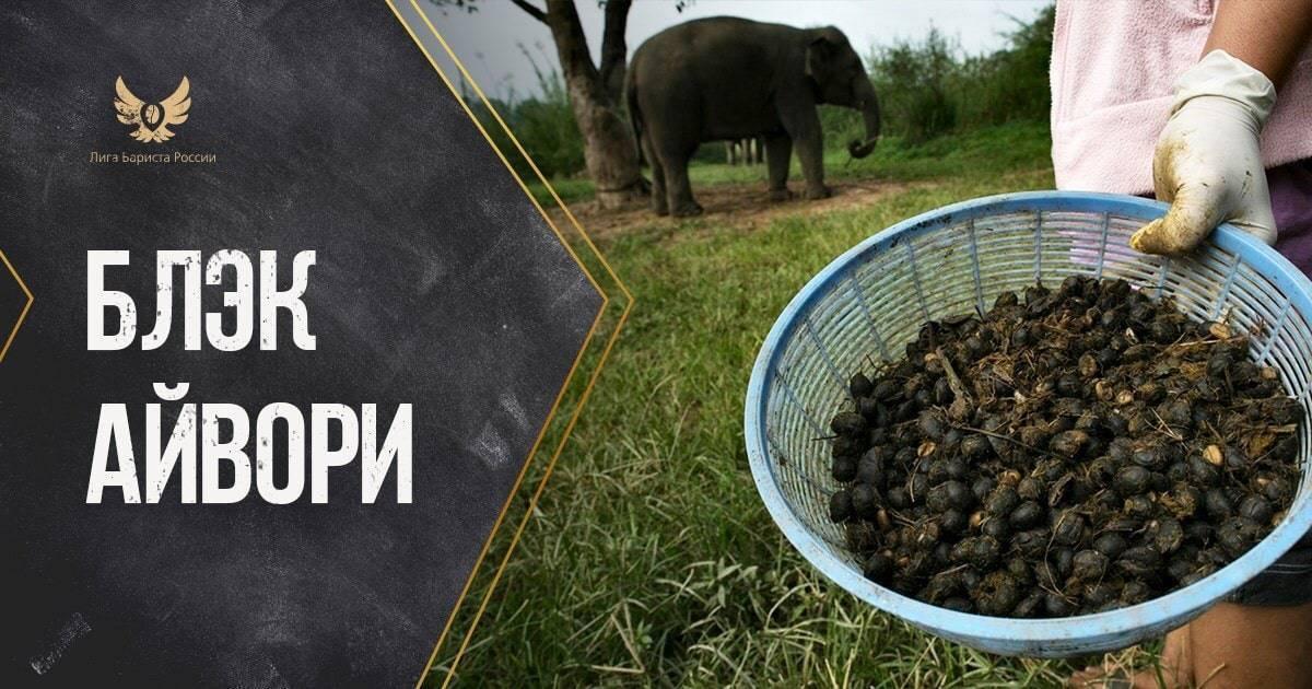 Кофе блэк айвори (black ivory): описание самого дорогого сорта в мире