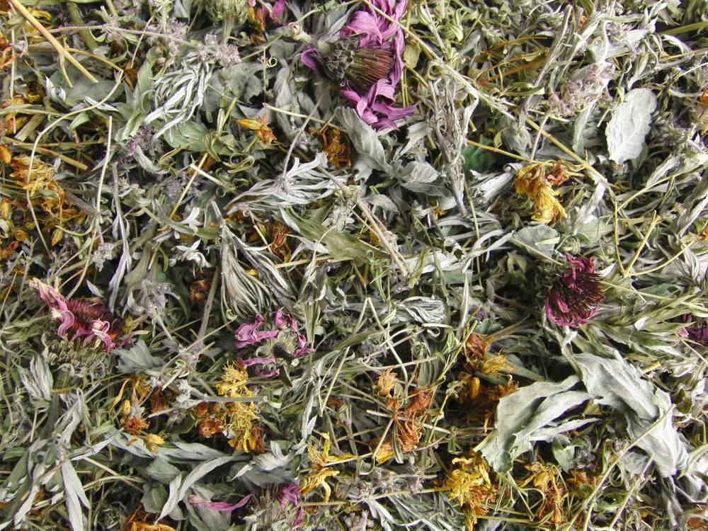 Как правильно сушить иван-чай в домашних условиях: что собрать — листья или цветы, при какой температуре и сколько времени дегидратировать, как после этого хранить?