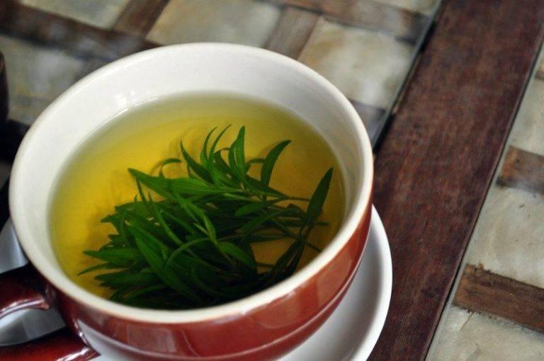 Тархун — 18 лечебных свойства и противопоказания