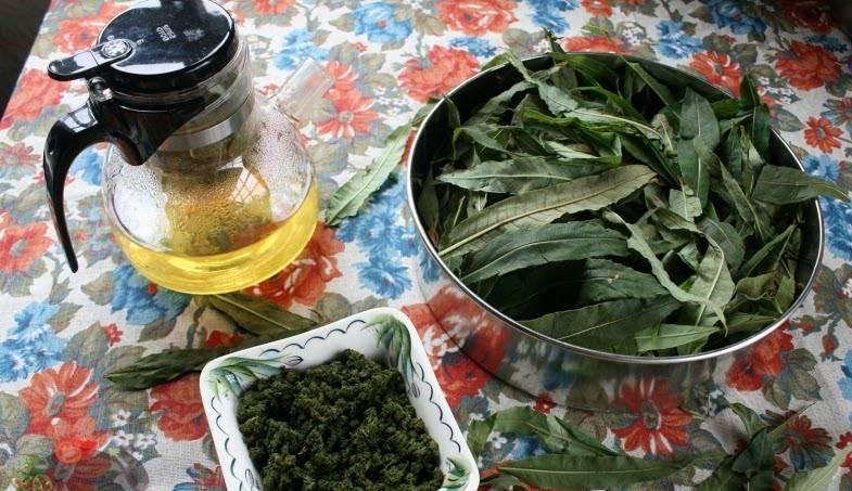 Лечебные свойства и противопоказания иван-чая для мужчин: как влияет на мужской организм, как правильно заваривать, вредные свойства