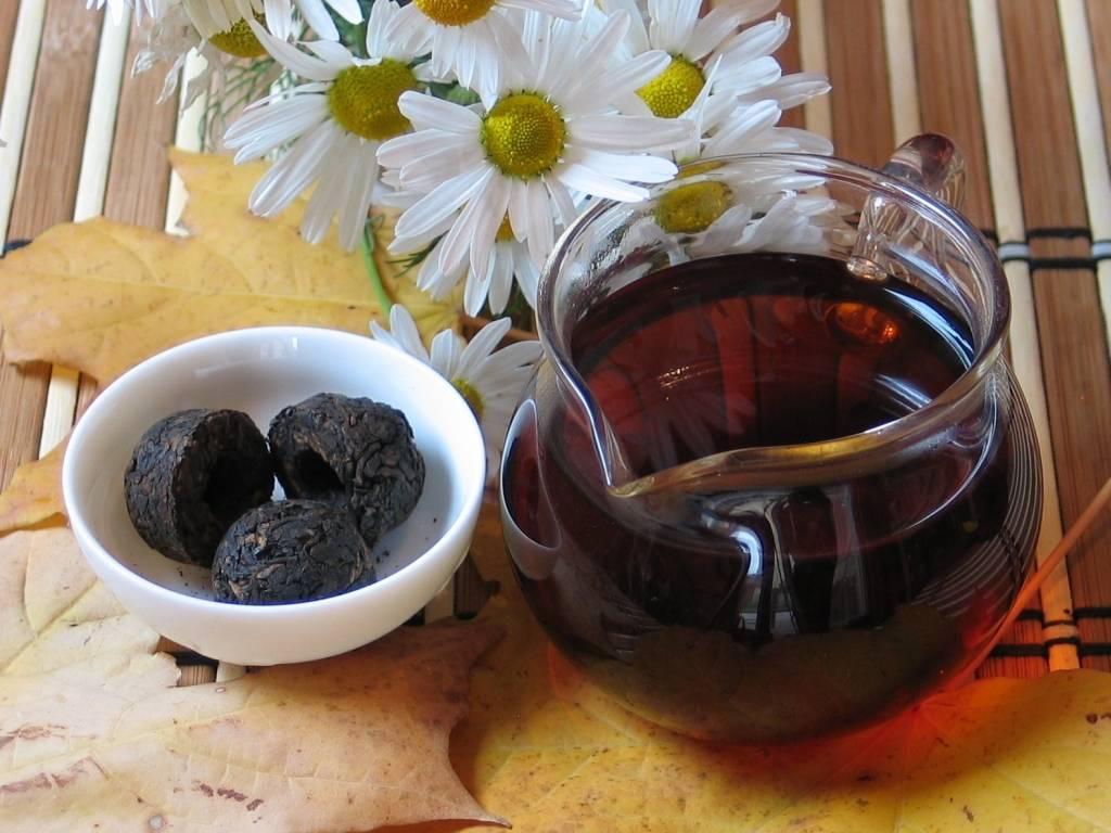 Чай пуэр полезные свойства и противопоказания
