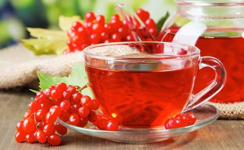 Рябина красная — лечебные свойства, противопоказания, рецепты | здоровье и красота