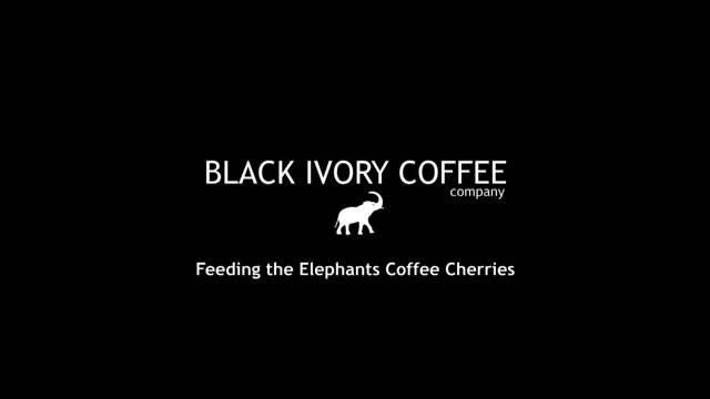 Особенности производства самого дорого кофе блэк айвори
