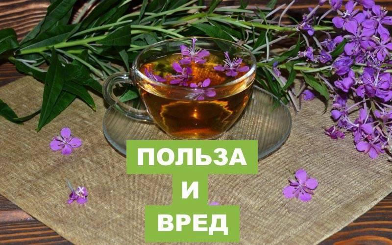Чем полезен чай иван чай для мужчин: особенности применения и показания