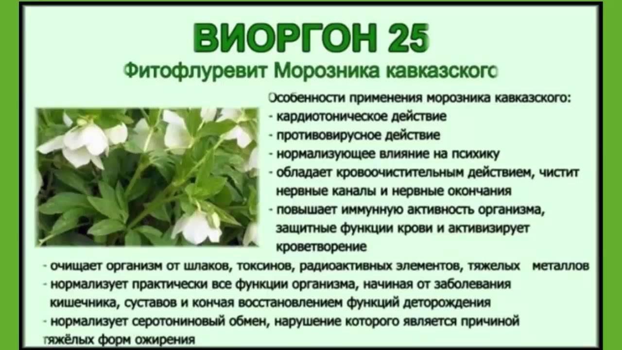 Трава кавказский морозник для похудения: отзывы врачей, как принимать