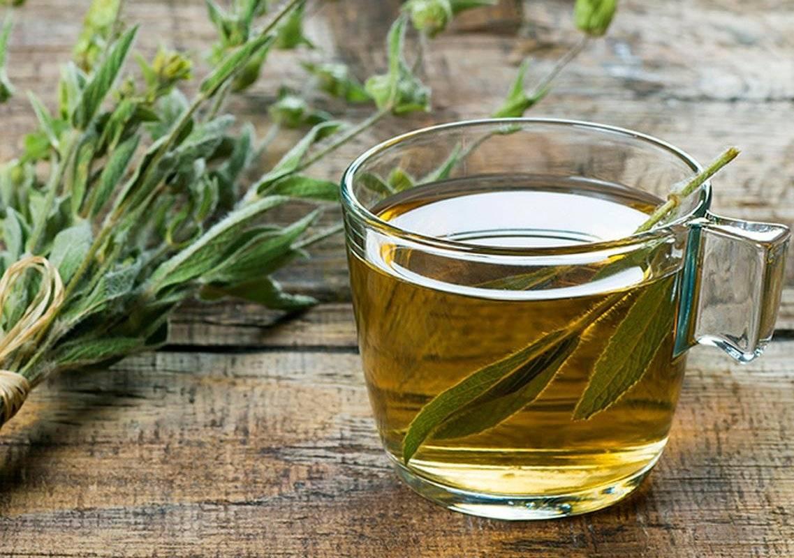Шалфей лечебные свойства чая