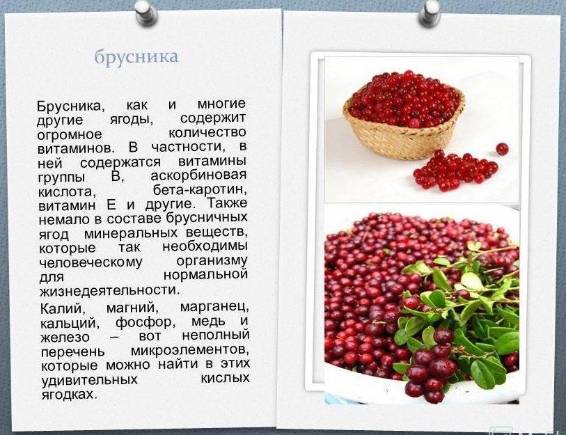 14 пошаговых рецептов морса из брусники с фото