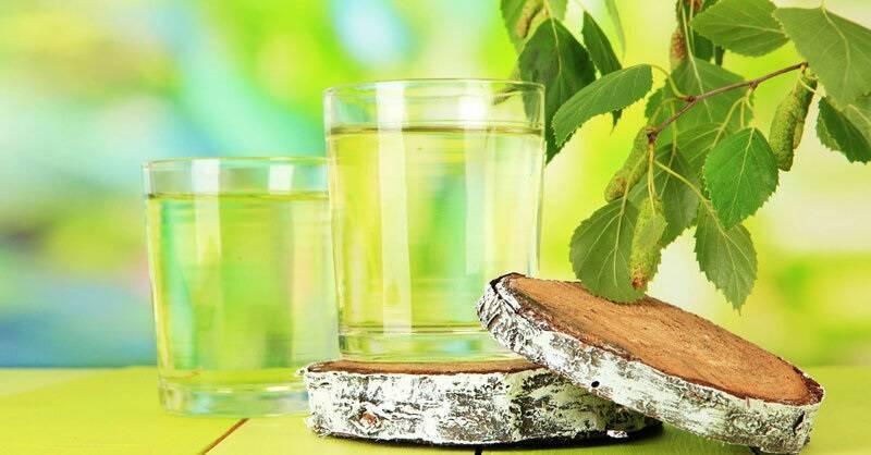 Забытый березовый чай: рецепты, применение в медицине