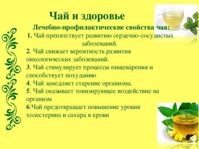 Зелёный чай польза и вред для женщин и мужчин