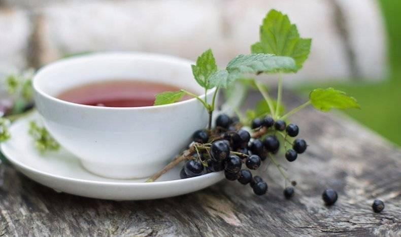 Ежевика – полезные свойства ягоды и ее маленькие секреты