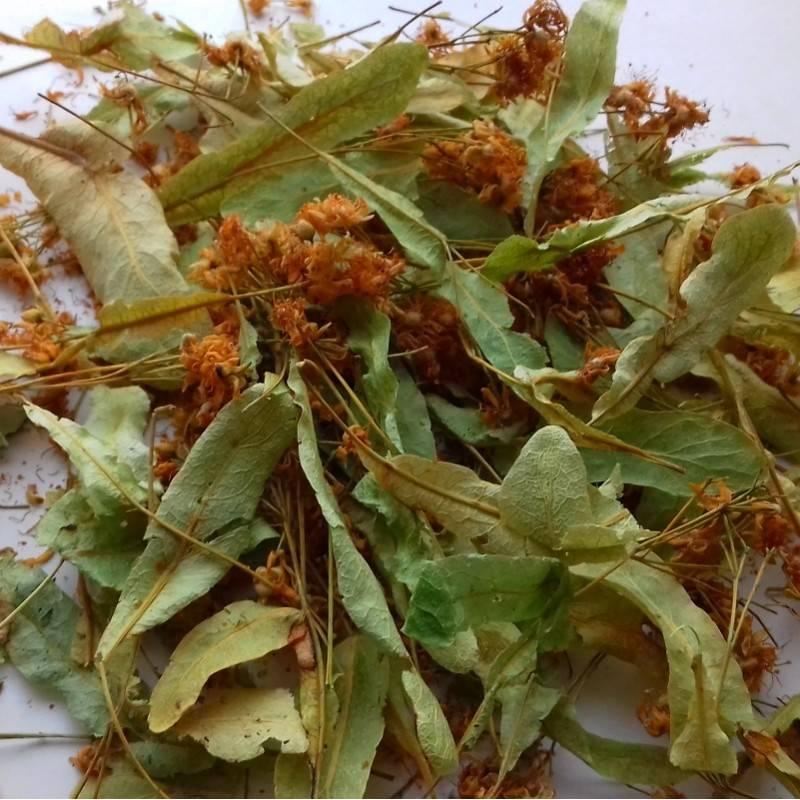 Заготовка липового цвета на зиму: когда собирать и как правильно сушить?