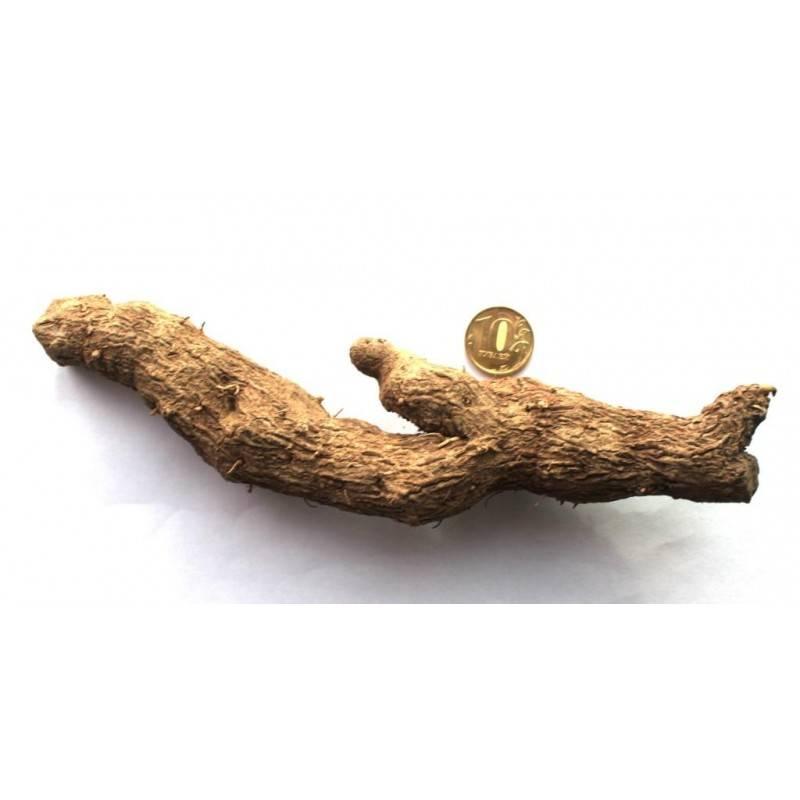 Адамов корень для суставов: рецепт настойки, бальзама, мази и способы применения
