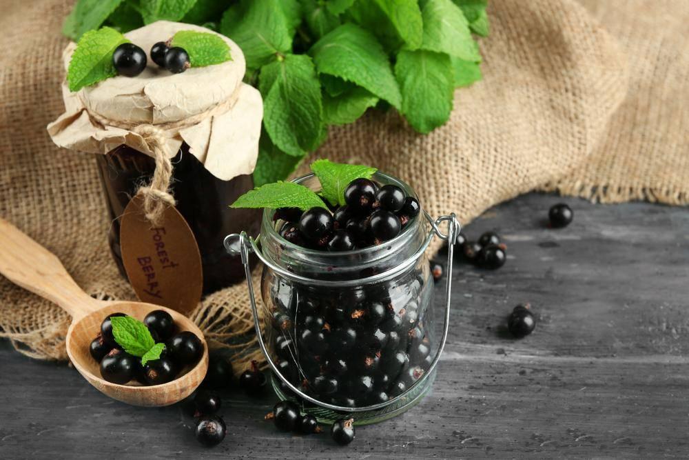 Чай из веток черники. противопоказания к употреблению листьев черники. как заваривать чай из черники
