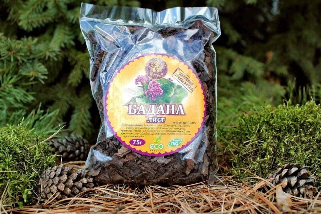 Чай из листьев бадана свойства как заваривать