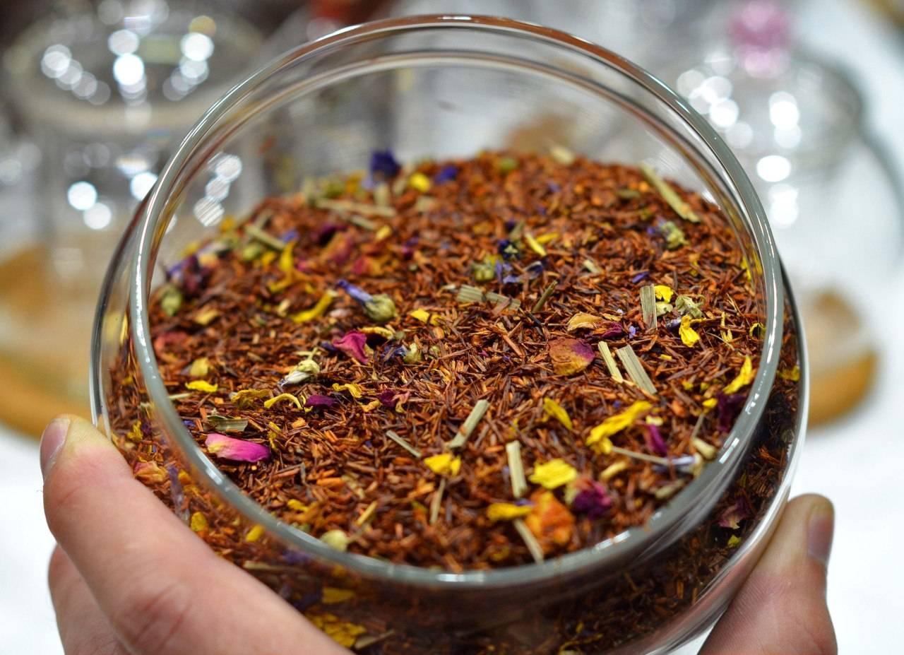 Полезные свойства, вред и противопоказания чая ройбуш