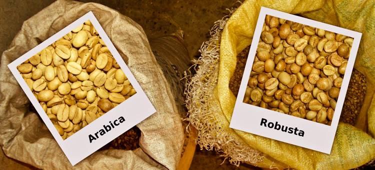 Различия арабики и робусты   какой кофе лучше и в чем разница   журнал про кофе bravos   яндекс дзен