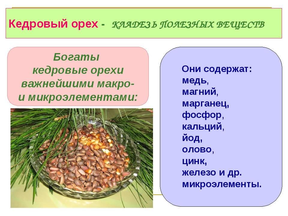 Кедровые орехи польза и вред для организма сколько нужно съесть