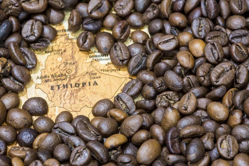 Характеристика вьетнамского кофе