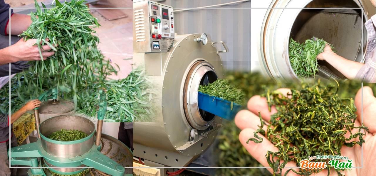 Открытие производства чая