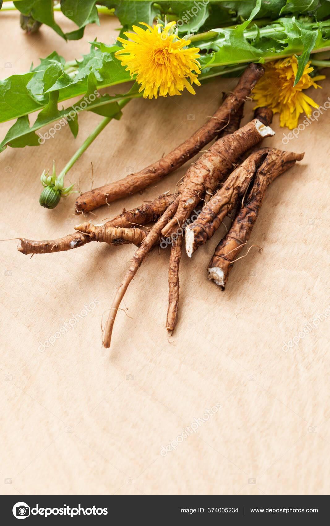 Для чего принимают корень одуванчика: полезные свойства