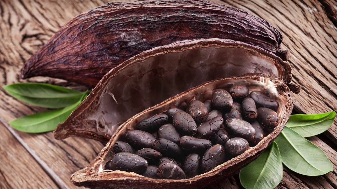 Польза и вред какао для организма человека