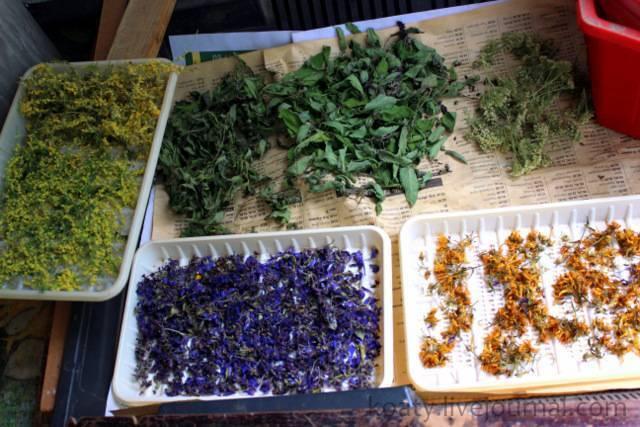 Растения для чая в огороде