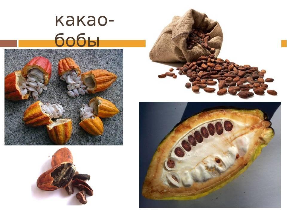 Какао: польза и вред для здоровья организма человека