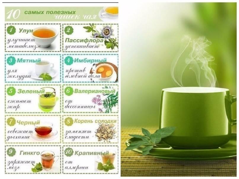 Полезные и ароматные травы для чая: что добавляют в напиток?