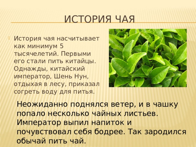 О чае. происхождение чая и его история