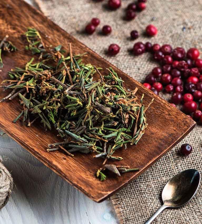 Лечебные свойства травы рододендрон адамса - показания и противопоказания, как заваривать и пить