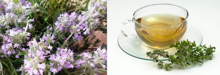 Можно ли пить чай с чабрецом при беременности?