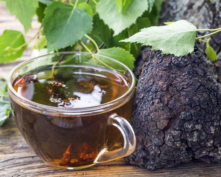 Чага (березовый гриб): полезные свойства и применение чаги, чай