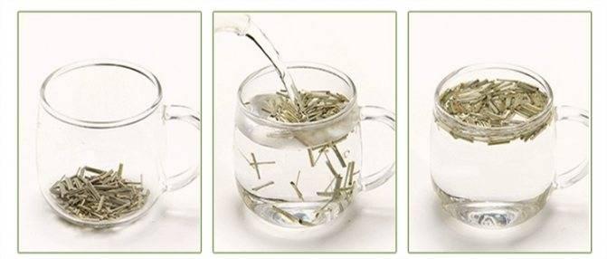 Лемонграсс: полезные свойства, противопоказания, польза и вред