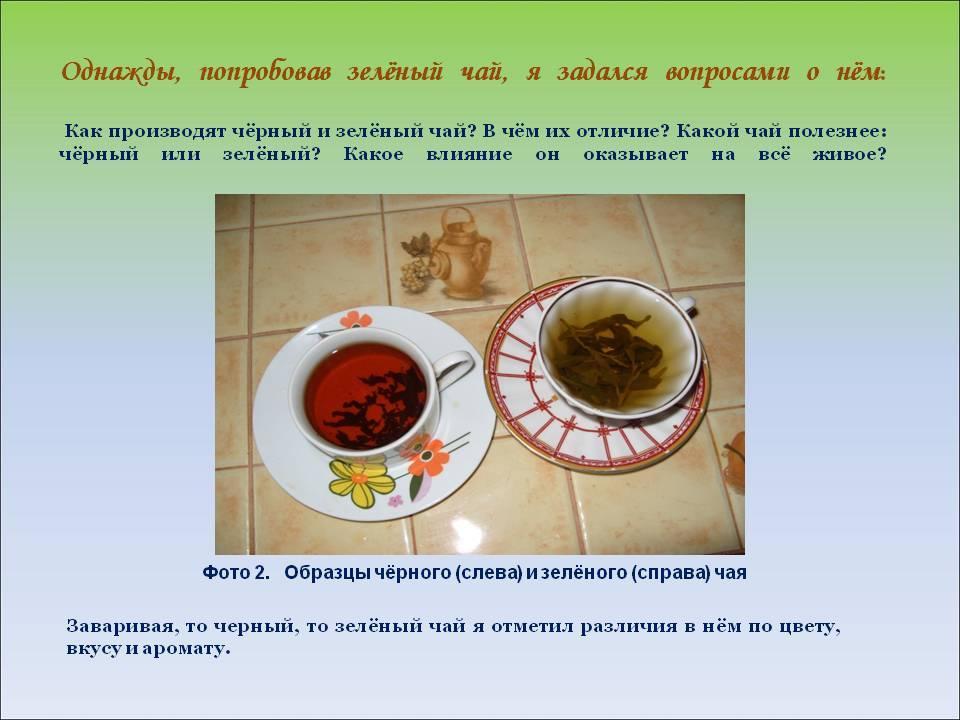Чем отличается зеленый чай от черного | medsovet103.ru
