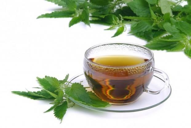Чай из крапивы, польза и лечебные свойства крапивного настоя