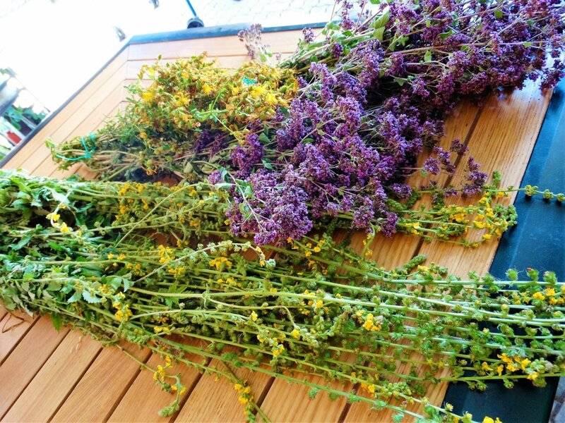 Как правильно, сколько и где в домашних условиях можно хранить травы для чая