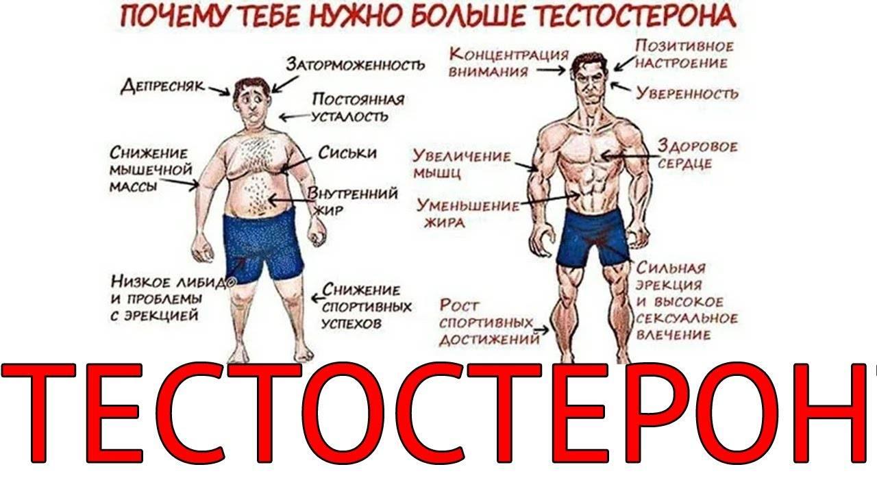 Кофеин для тестостерона у мужчин