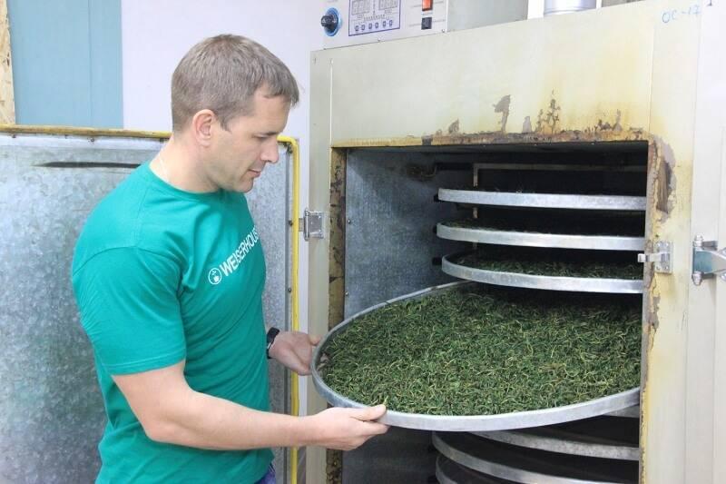 Идея для бизнеса - производство и реализация иван-чая: организация